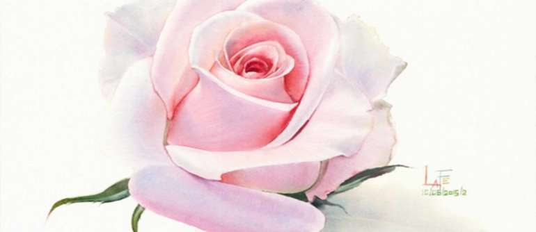AquaRel rose